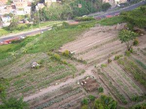 Bolivarian Food Revolution