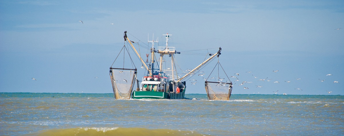 Commercial Fishing - Food Empowerment Project