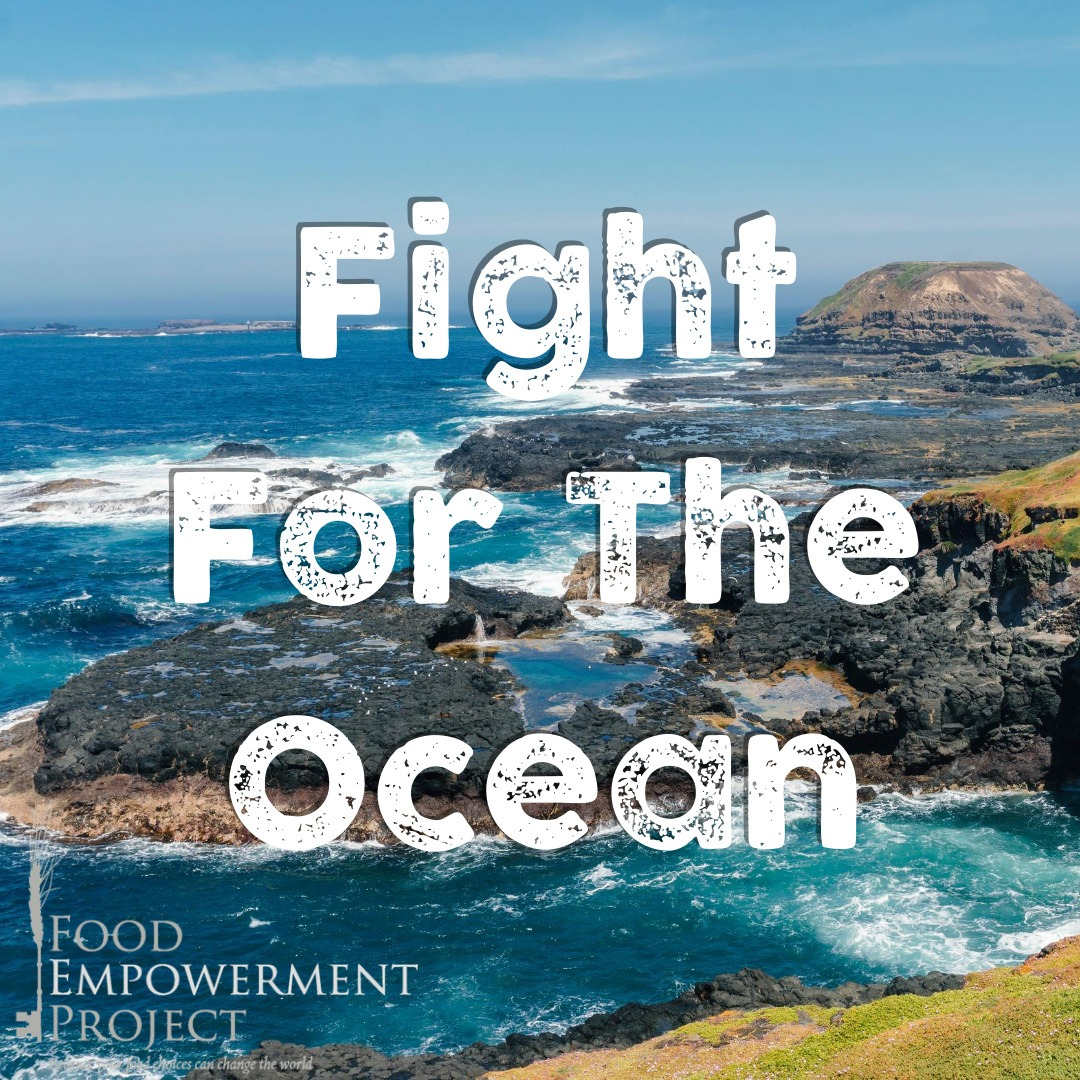 Fight For The Ocean